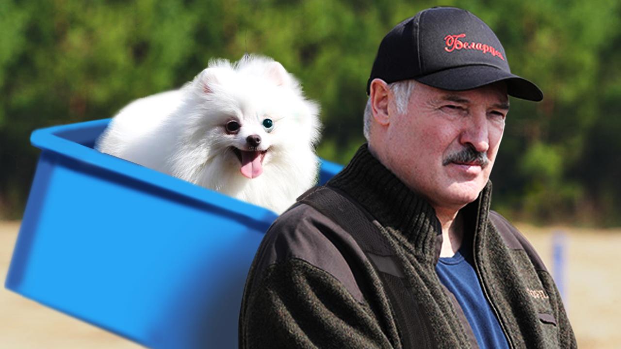 Лукашенко все время объясняет, что у него ничего своего нет, только шпиц Умка